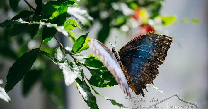 Tropische Welt der Schmetterlinge